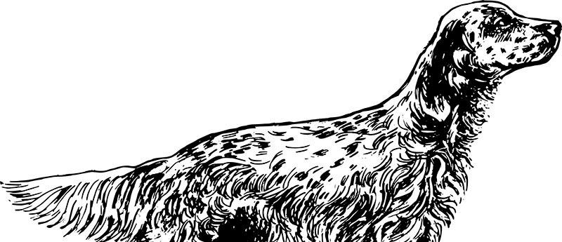 Campeonatos intercomarcales-de-caza-menor-con-perro-Castellon 2016